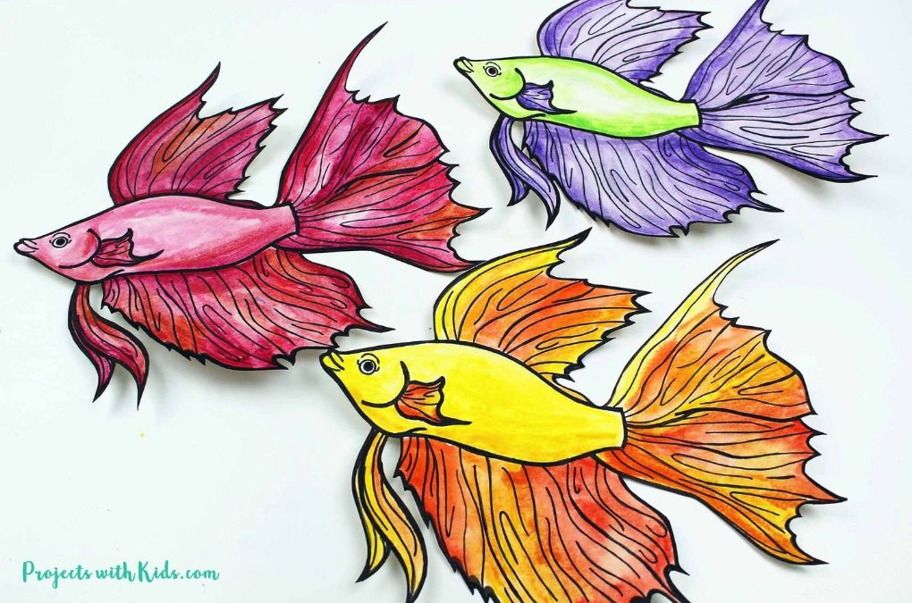 3 beta fish painted with watercolors on a white background.