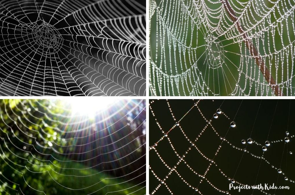 Spider web photographs